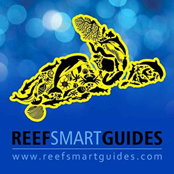 Reef Smart Guides